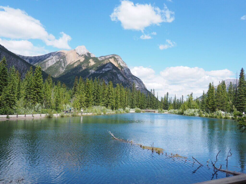 Mt Lorette Ponds - Image of pond and surrounding nature